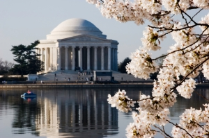 Cherry Blossom Festival in the Nation's Capital