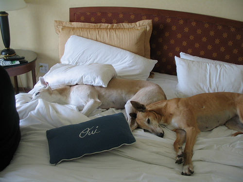 1800hotels knowledge that travels by 1800hotels page 5 for New york pet friendly hotels